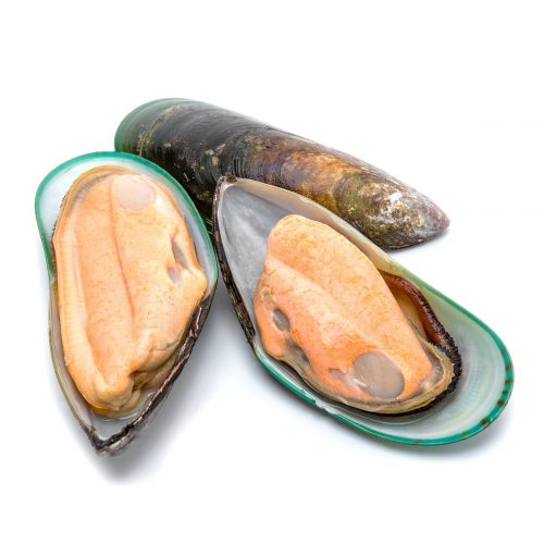Live Green Shell Mussels - 800gm